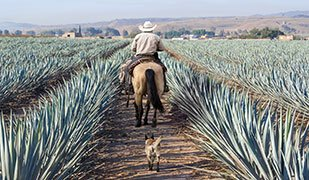 Let's talk about Mexican tequila